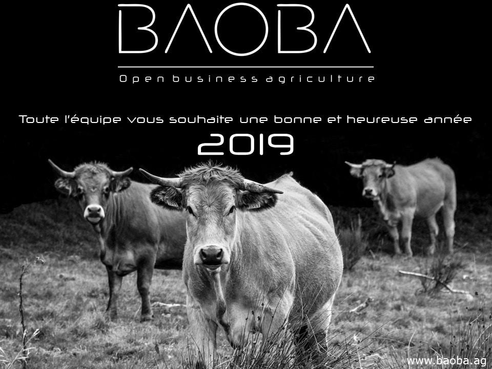 Carte_voeux_2019_BAOBA